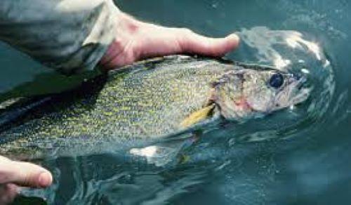 About the state of south dakota south dakota secretary of for South dakota walleye fishing